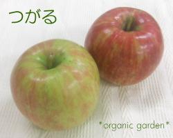 三上さんの有機りんご「つがる」