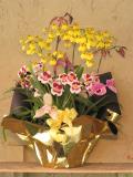 蘭花屋 静岡 花 花や 花束 送料無料 フラワーアレンジメント プレゼント ギフト 鉢花 観葉植物 胡蝶蘭 コチョウラン