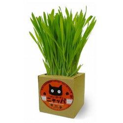 有機栽培猫草/ニャッパ