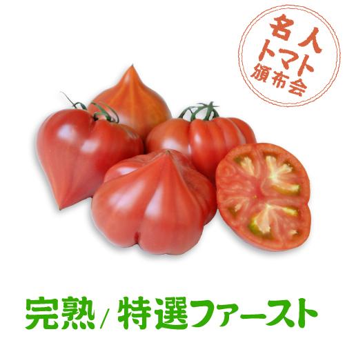 トマト頒布会_ファースト