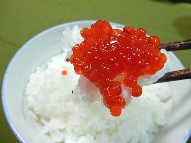 紅鮭すじこ醤油漬け