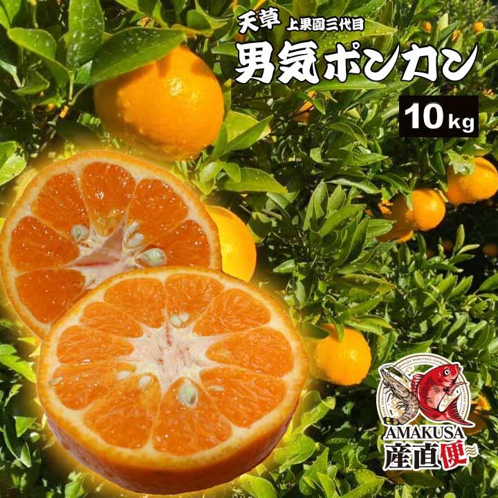 \出荷できるのは2月だけ!/上果園の男気ぽんかん10kg(低しょう系)【2021年2月出荷予約受付中!】