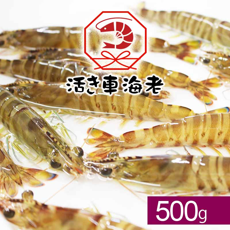 <水産物応援商品SU00004>送料無料 活き車海老500g(18-28尾入り)