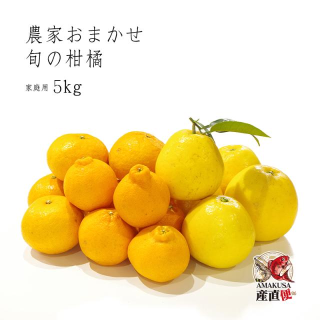 農家おまかせ旬の柑橘(家庭用)5kg