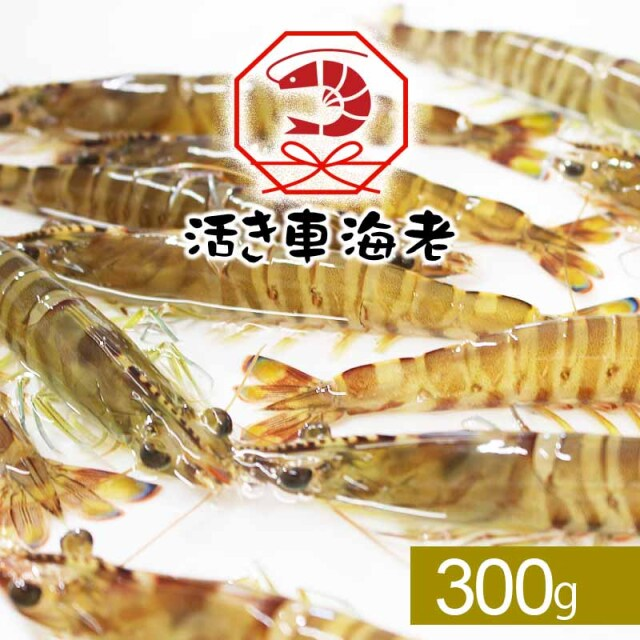 【水産物応援商品】送料無料 活き車海老300g(8-18尾入り)