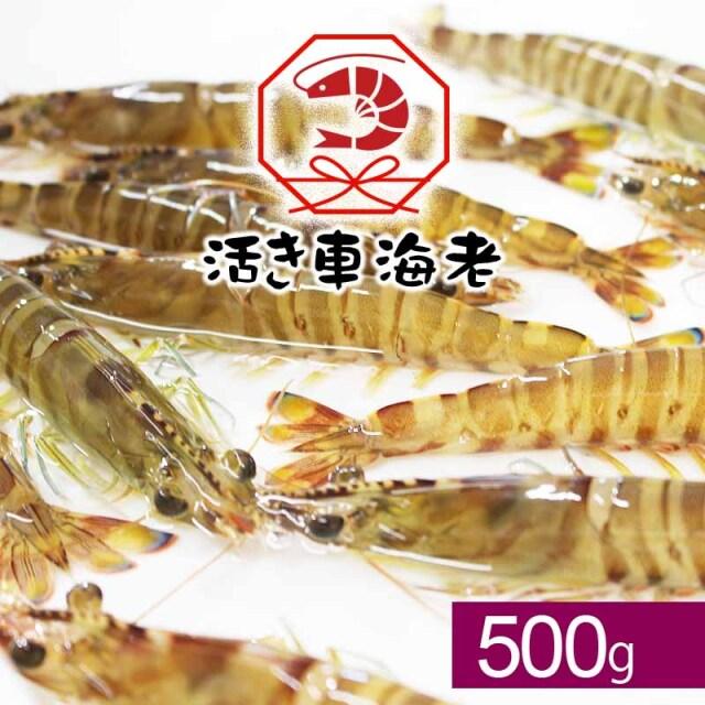 【水産物応援商品】送料無料 活き車海老500g(18-28尾入り)