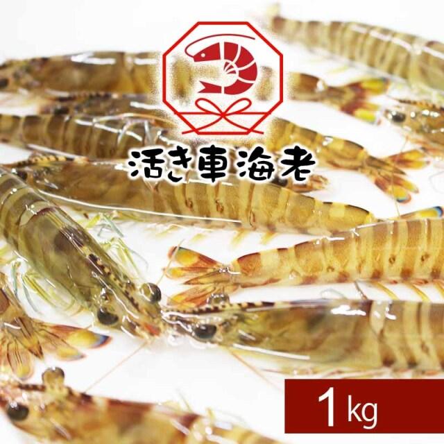 <水産物応援商品>送料無料 活き車海老1kg(38-48尾)