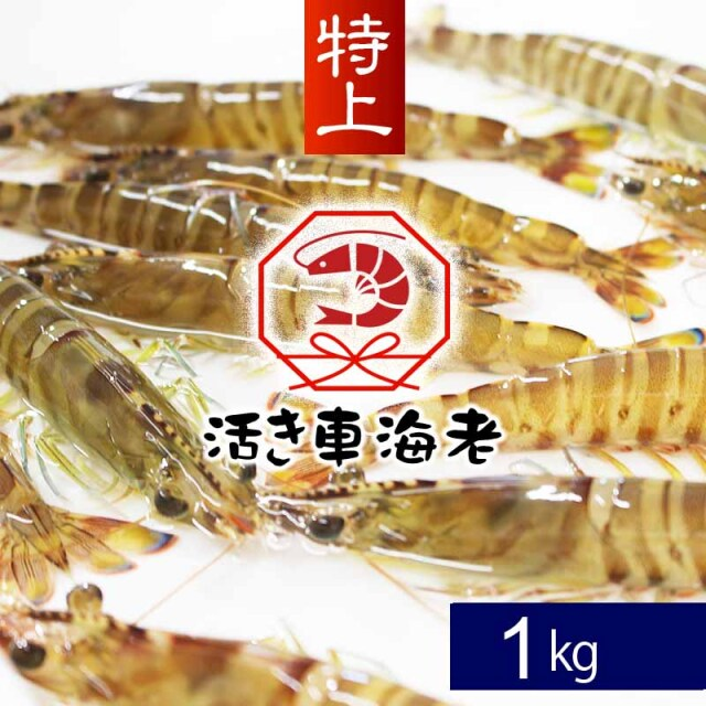 【2021年冬予約受付中】送料無料 特上 活き車海老1kg(25-32尾)