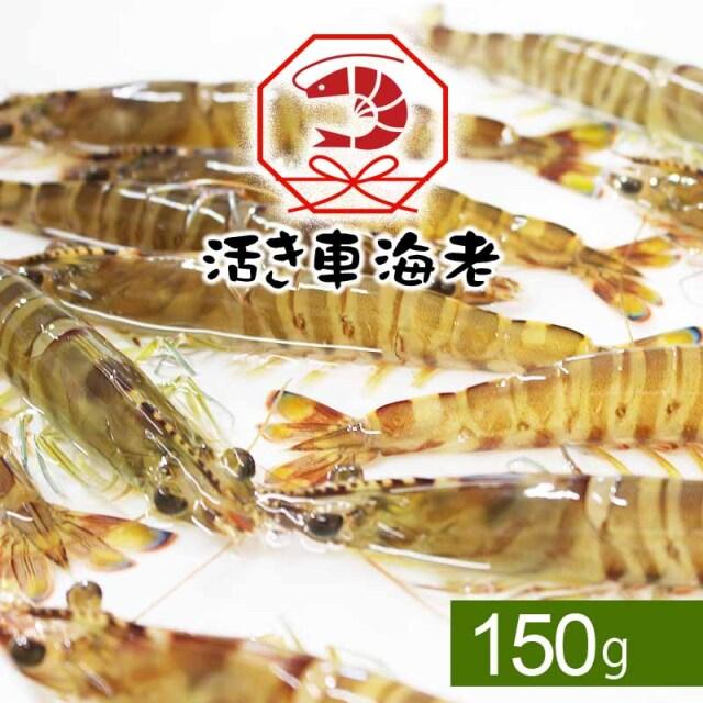 【水産物応援商品】送料無料 活き車海老150g(5-8尾入り)