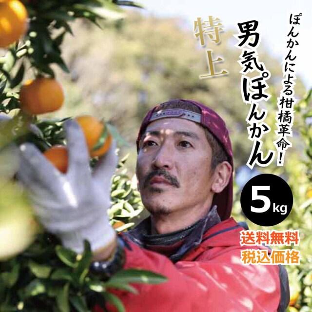 \出荷できるのは2月だけ!/上果園の男気ぽんかん5kg(低しょう系)【2021年2月出荷予約受付中!】