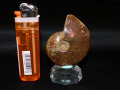 アンモナイト化石 50グラム