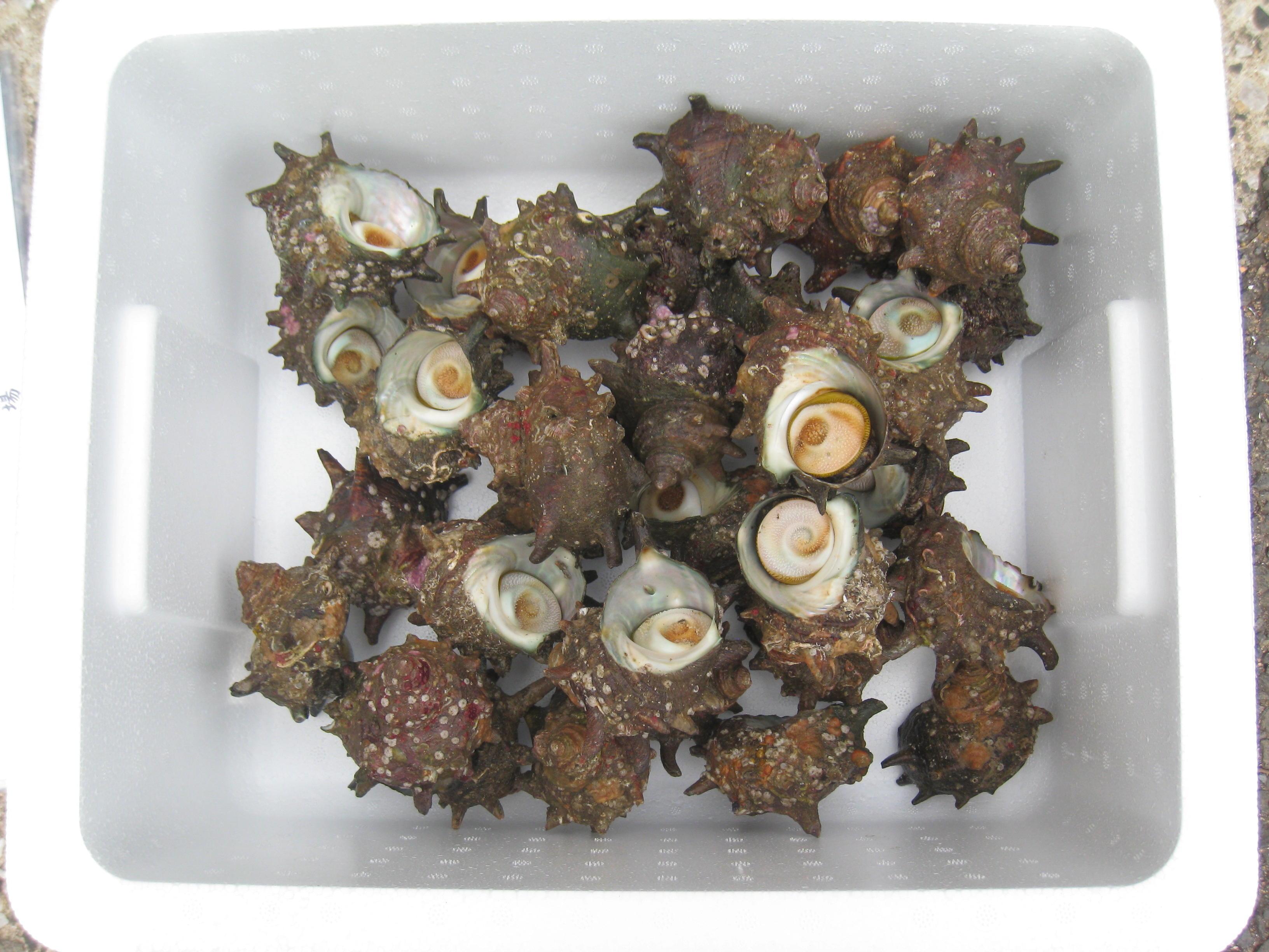 鮮魚ギフト-B
