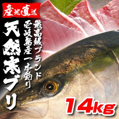 壱岐一本釣りブリ14k