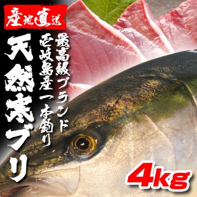 壱岐一本釣りブリ4k