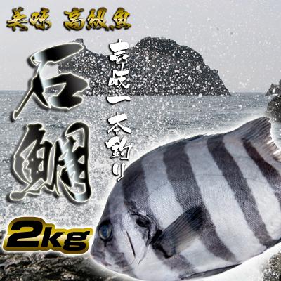 壱岐一本釣イシダイ2k 30%OFF