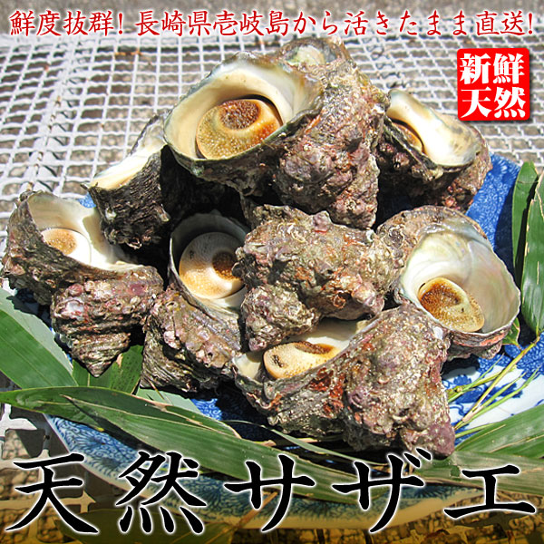 壱岐サザエ小1k