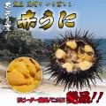 壱岐産 赤ウニ(かきおとし)100g