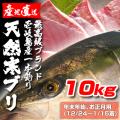 壱岐一本釣りブリ10k (年末年始12/24~1/15着)
