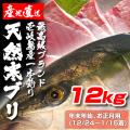壱岐一本釣りブリ12k (年末年始12/24〜1/15着)