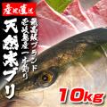 壱岐一本釣りブリ10k