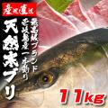 壱岐一本釣りブリ11k