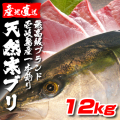 壱岐一本釣りブリ12k