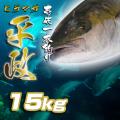 壱岐一本釣りヒラマサ15k 30%OFF