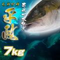 壱岐一本釣りヒラマサ7k 30%OFF