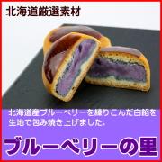 焼き菓子 ブルーベリーの里 6個入