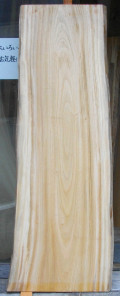 AG−385 楠木(クスノキ)材