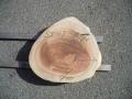 SS−7 楠木輪切り素材 ■売却済み