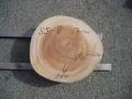 SS−8 楠木輪切り素材■売却済み
