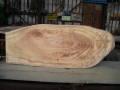 BG-23 楠木の看板素材  ■売却済み