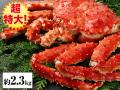 超特大!!北海道紋別浜茹で たらばがに姿 約2.3kg