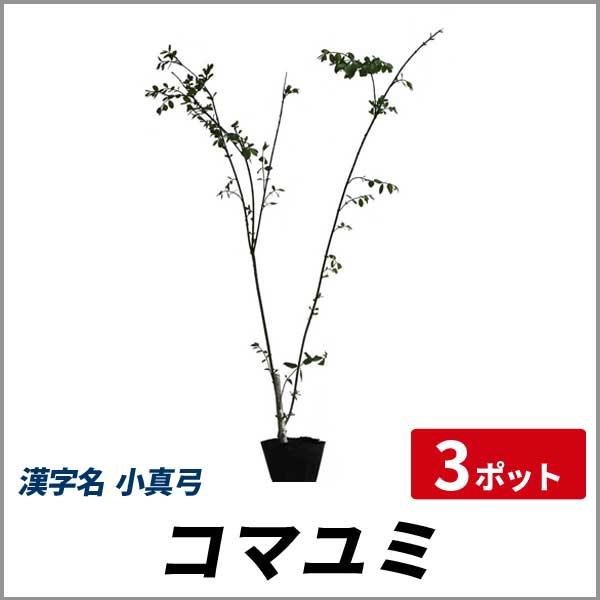 コマユミ_h08_003.jpg