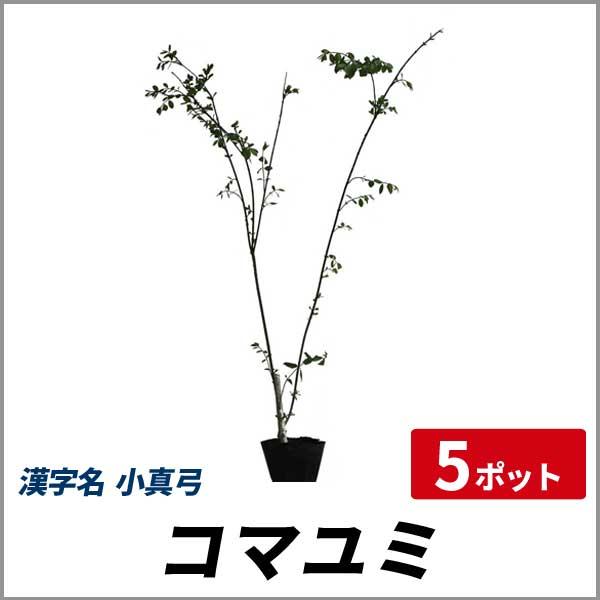 コマユミ_h08_005.jpg