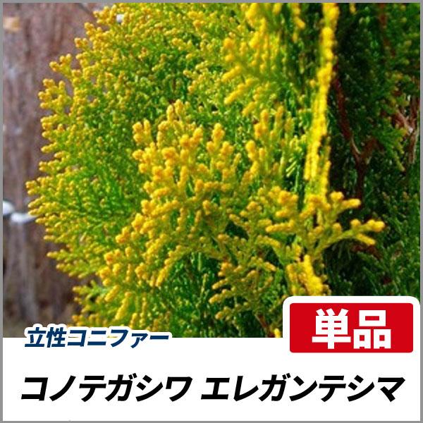 エレガンテシマ_h12_001