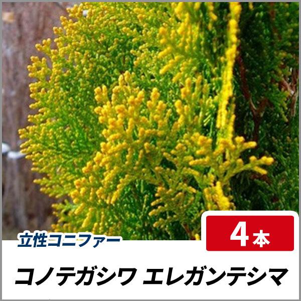 エレガンテシマ_h12_004
