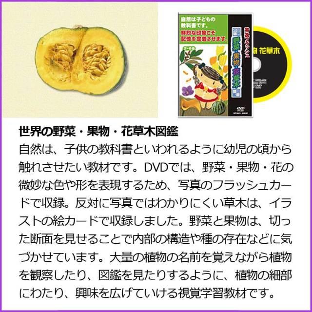 世界の野菜・果物・花草木図鑑