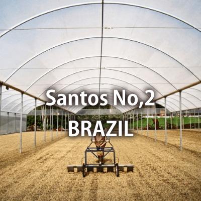 ブラジル サントス NO,2 #18