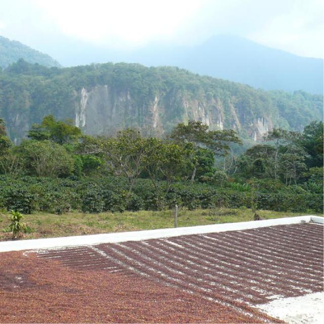 グァテマラ サント・トーマス・パチュージ農園