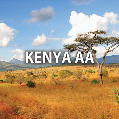 ケニア AA