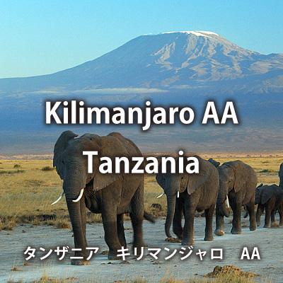 タンザニア キリマンジャロ AA