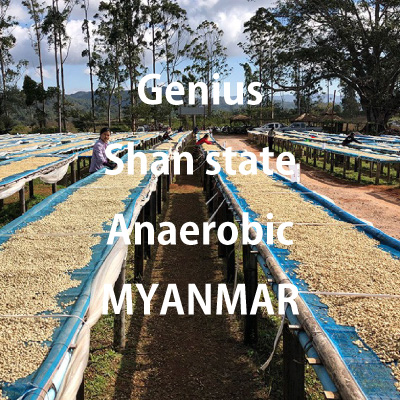 ミャンマー ジーニアス シャンステイト 嫌気性発酵