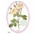 2018年  ルドゥーテ オーバル壁掛けカレンダー 薔薇 平成30年度 13枚つづり 日本製