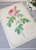 2020年  ルドゥーテ 壁掛けカレンダー大判 薔薇の香り付き 令和2年度  14枚つづり 日本製