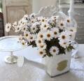 マーガレット ブッシュ  造花 ナチュラル 可愛い 花 グリーン シルクフラワー アーティフィシャルフラワー インテリアフラワー