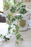 ミニシサスアイビー バイン シュガーバイン 造花 北欧 ナチュラル 可愛い 花 グリーン シルクフラワー アーティフィシャルフラワ