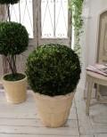 ボックスウッドのトピアリー(ラウンドL) ツゲボール ツゲのトピアリー 柘植 プリザーブドフラワー シャビーシック アンティ