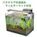【お手軽・送料無料】初心者でもスグにはじめられる30cm水槽セット(熱帯魚・水草付き)